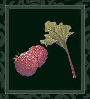 Rhubarb/Raspberry Wine